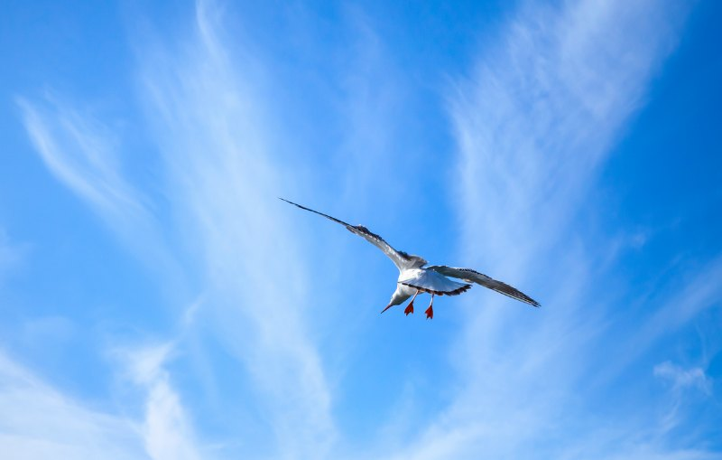 You're ready to soar with Second Season